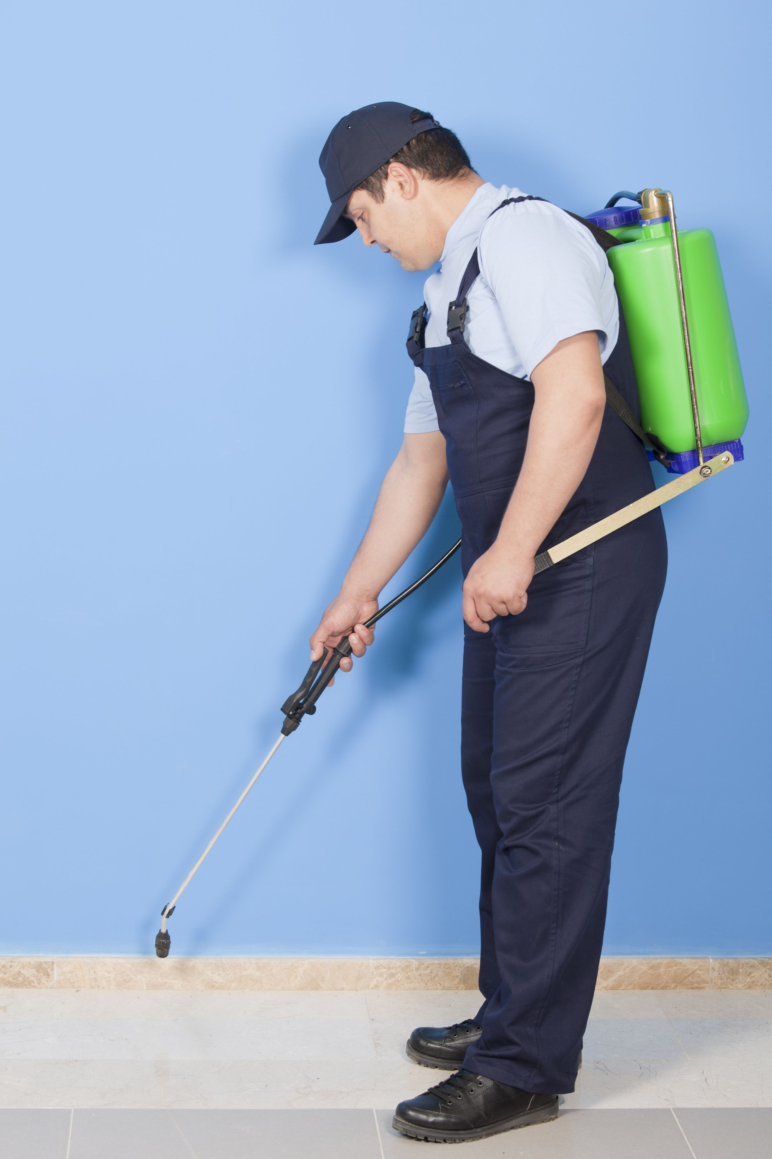 11 Tips on Finding a Reputable Pest Management Company