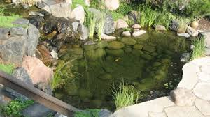 The basics of building a pond and the importance of a quality liner